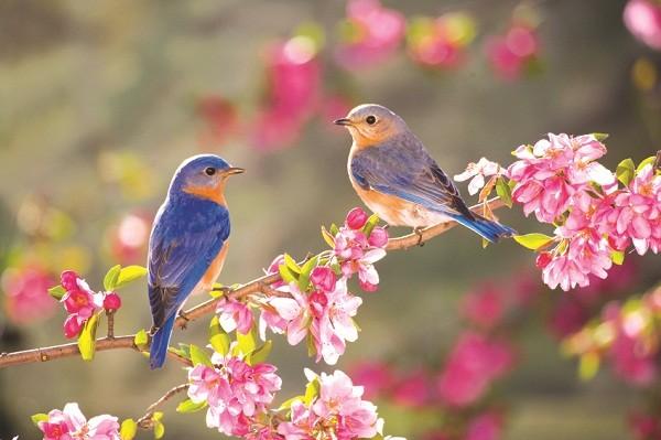 学唱歌曲《聆听春天的到来》(第一期) - ảnh 2