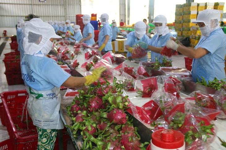 加强对接——越南农产品出口增长的钥匙 - ảnh 1