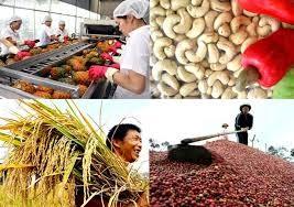 加强对接——越南农产品出口增长的钥匙 - ảnh 2