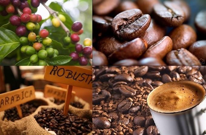 提高越南咖啡价值 - ảnh 1