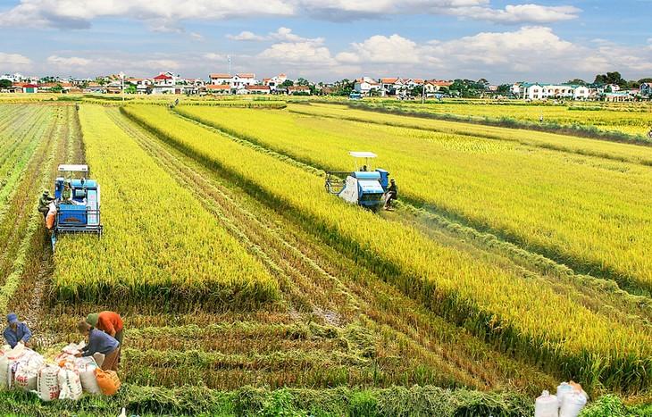 越南实施2030年可持续发展目标路线图 - ảnh 1