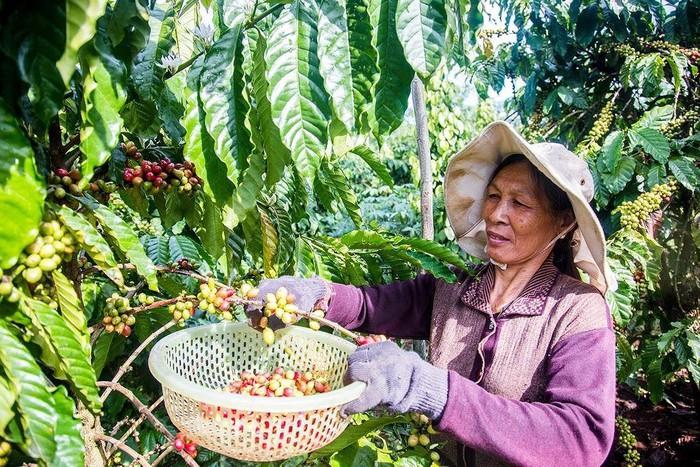 中国媒体:EVFTA给越南带来巨大机会 - ảnh 1