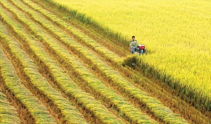 越南-瑞士:遥感技术与保险在水稻生产中的应用 - ảnh 1