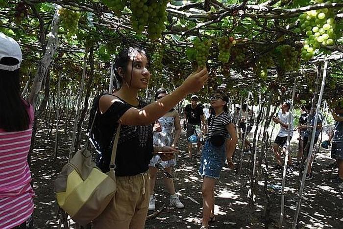 越南夏令营:心里留着家乡形象 - ảnh 1