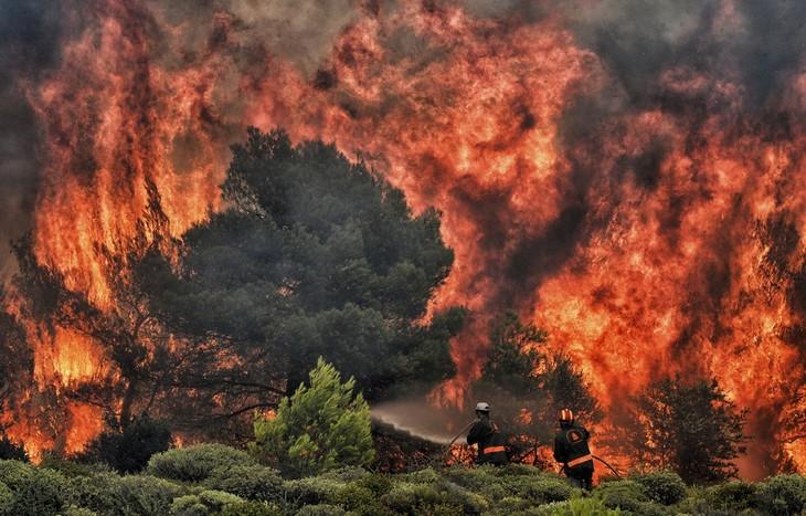 Grèce: Le bilan provisoire des incendies monte à 79 morts - ảnh 1