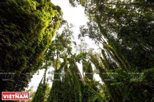 Finnische Unternehmen wollen in Forstwirtschaft in Vietnam investieren - ảnh 1