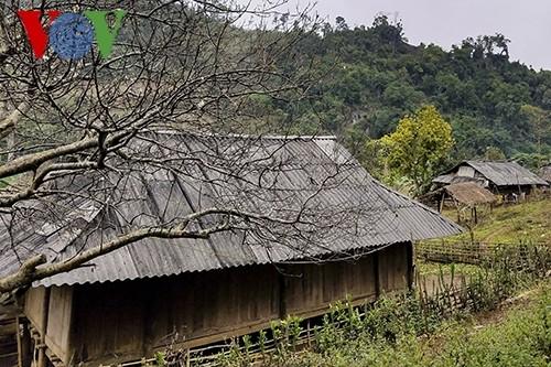 Frühling in den Dörfern im Nordwesten - ảnh 1