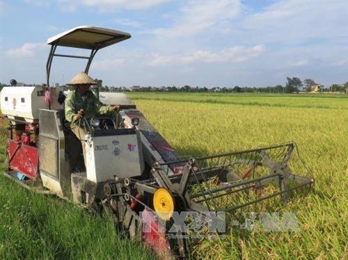Thai Binh entwickelt die Landwirtschaft - ảnh 1