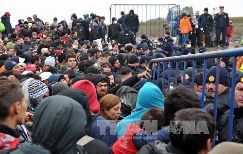 Проблема беженцев продолжает раскалывать Европу - ảnh 1
