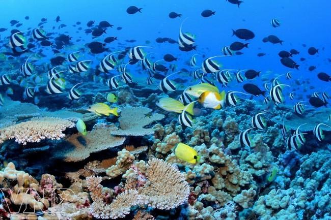 90多个国家承诺出资数十亿美元保护海洋生态环境 - ảnh 1