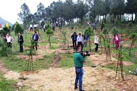 承天顺化省努力完成2018年森林保护和发展指标 - ảnh 1