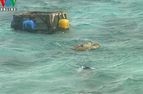 Catching amberjacks on Truong Sa islands - ảnh 3