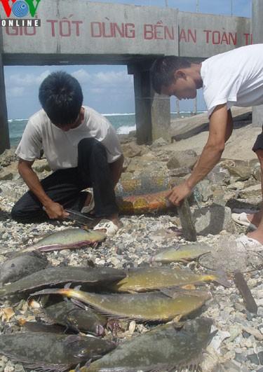 Catching amberjacks on Truong Sa islands - ảnh 6
