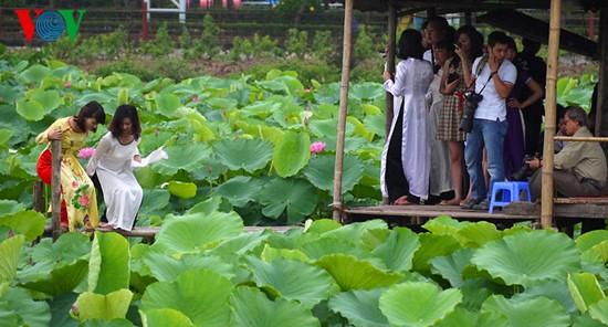 Lotus im Westsee am frühen Morgen - ảnh 6