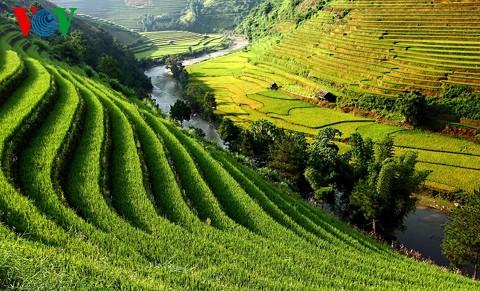 Kultur des Terrassenfeldbaus in nordvietnamesischen Gebirgsregionen - ảnh 2