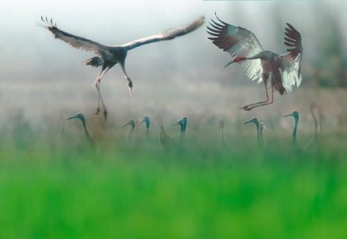 Schöne Landschaftsfotos in der Fotoserie über Kraniche des Fotografen Tang A Pau - ảnh 17