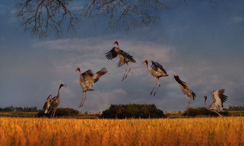 Schöne Landschaftsfotos in der Fotoserie über Kraniche des Fotografen Tang A Pau - ảnh 18