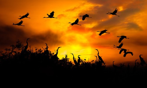 Schöne Landschaftsfotos in der Fotoserie über Kraniche des Fotografen Tang A Pau - ảnh 20