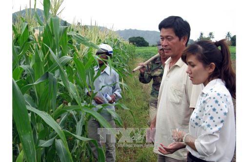APEC bevorzugt Lebensmittelsicherheit und Landwirtschaft bei Klimawandel - ảnh 1