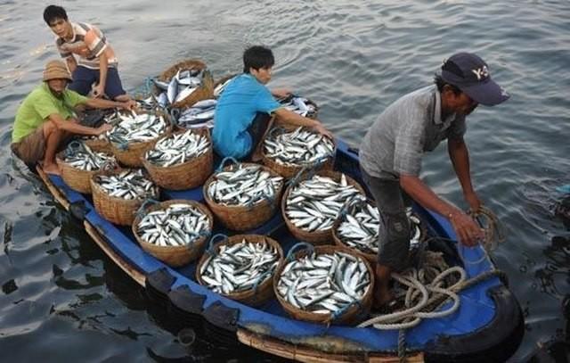 Kooperation zur Verwaltung von Fischerei und Umweltschutz im Ostmeer - ảnh 1