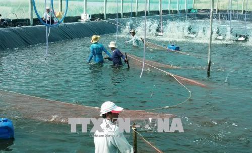 """Vietnam ist aktiv bei der Beseitigung der """"Gelben Karte"""" der EC für Fischerei - ảnh 1"""