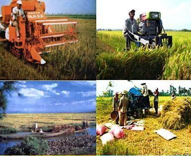 Forum für nachhaltige Entwicklung des Mekong-Deltas zur Anpassung an den Klimawandel - ảnh 1