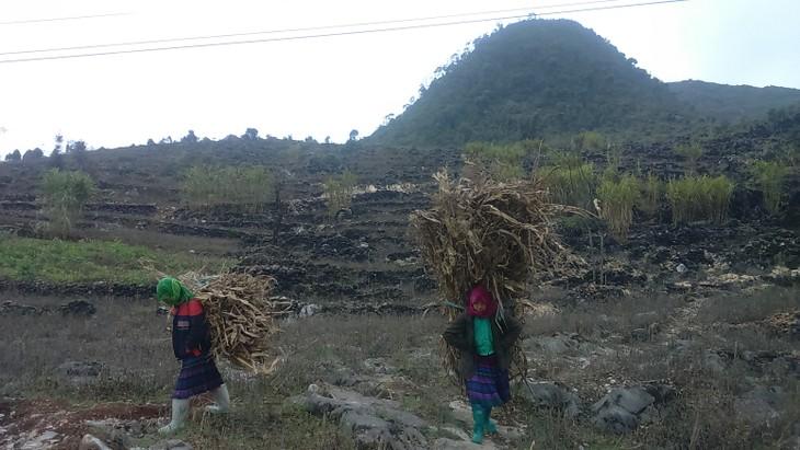 Para warga etnis minoritas Meo Vac bertarung melawan udara dingin berat - ảnh 7