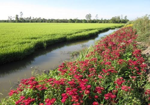 """Pola """"Sawah padi, pematangnya ditanami bunga  turut melakukan produksi pertanian secara berkesinambungan - ảnh 3"""