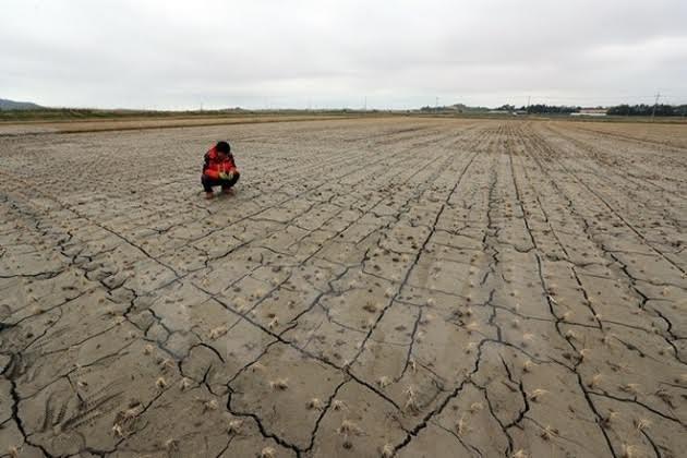 Para walikota di seluruh dunia mengimbau kepada pemimpin G-20 supaya berkomitmen menanggulangi perubahan iklim - ảnh 1