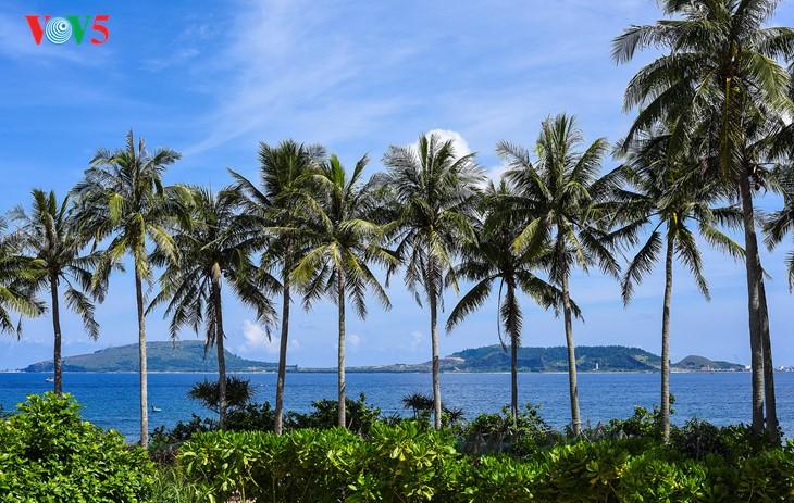"""""""Museum"""" geologi gunung berapi purba yang jarang ada di dunia di Pulau Ly Son - ảnh 2"""