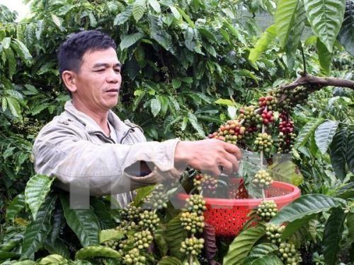 Vietnam ikut serta dalam badan pengurus Asosiasi Kopi Asia - ảnh 1