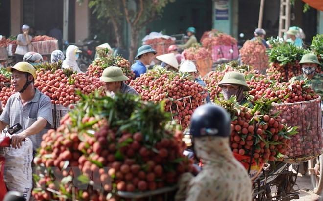 Provinsi Hai Duong mengekspor kira-kira 9.500 ton buah leci - ảnh 1