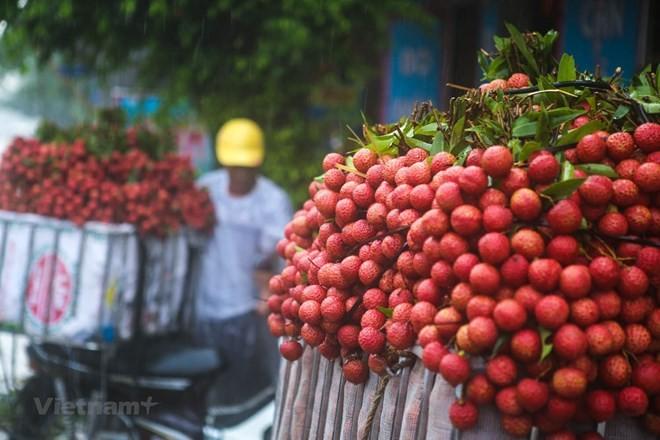 Vietnam Airlines memasukkan buah leci dalam misi-misi penerbangan domestik dan internasional - ảnh 1
