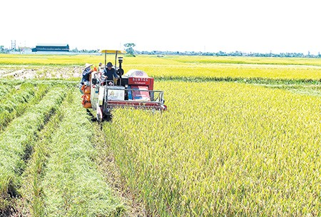 Provinsi Thai Binh mengembangkan ekonomi pertanian - ảnh 1