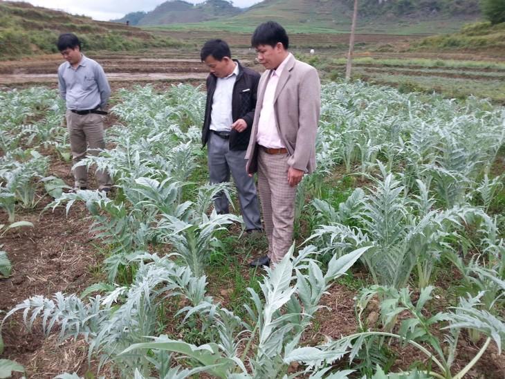 Kabupaten Quan Ba, Provinsi Ha Giang mengembangkan pohon herba obat untuk meningkatkan kehidupan warga - ảnh 1