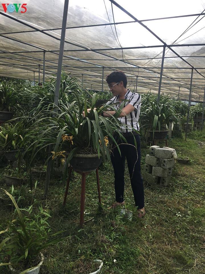 Penanaman pohon bunga anggrek tanah membantu warga Kecamatan Ta Phin lepas dari kemiskinan - ảnh 1