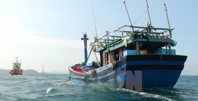 Berupaya menghapuskan kartu kuning yang dikenakan Komisi Eropa terhadap hasil perikanan Viet Nam - ảnh 2