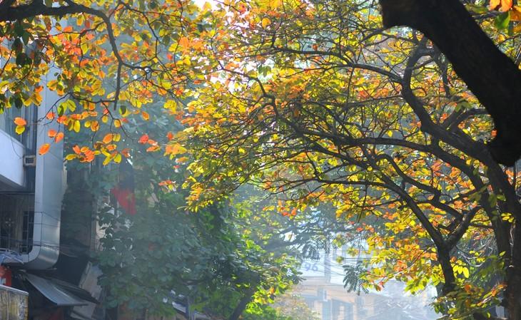 Warna musim gugur Kota Ha Noi - ảnh 4