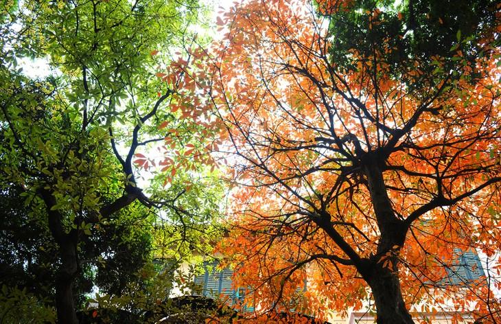Warna musim gugur Kota Ha Noi - ảnh 6