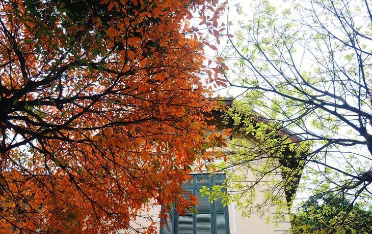 Warna musim gugur Kota Ha Noi - ảnh 7