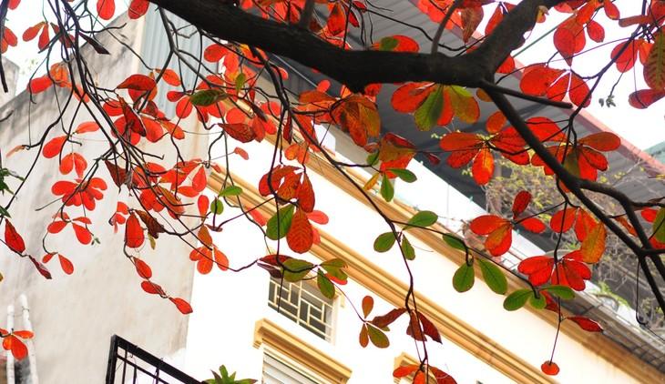 Warna musim gugur Kota Ha Noi - ảnh 8