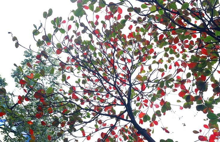 Warna musim gugur Kota Ha Noi - ảnh 9