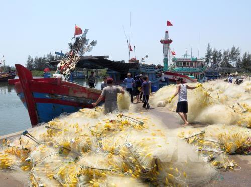 Kota Da Nang memperkuat usaha mencari asal-usul hasil perikanan - ảnh 1