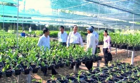 Ekonomi kepala keluarga turut mengembangkan dukuh di Provinsi perbatasan Lai Chau - ảnh 1