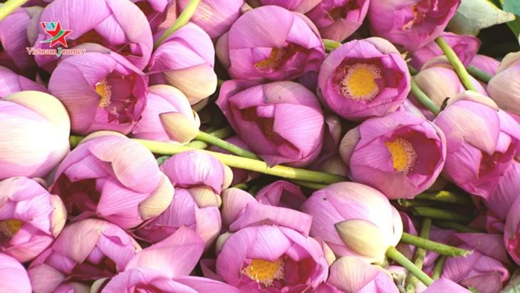 Mengunjungi Vietnam, memandangi warna bunga teratai di musim panas - ảnh 5
