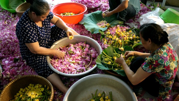 Teh beraroma teratai Danau Tay – Intisari orang Kota Hanoi - ảnh 22