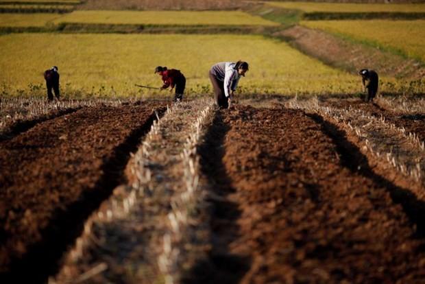 PBB membolehkan Uni Eropa memberikan bantuan mesin pertanian kepada RDRK - ảnh 1