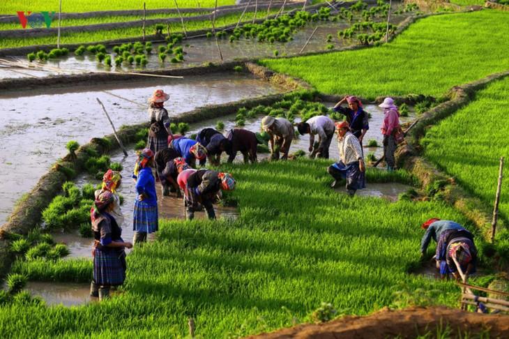 Mu Cang Chai – salah satu destinasi yang paling indah di dunia - ảnh 12