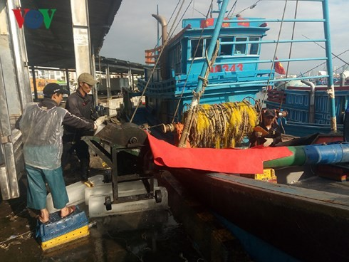 Fishermen set sail in New Year - ảnh 1