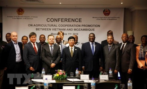 Vietnam, Mozambique boost agricultural cooperation - ảnh 1